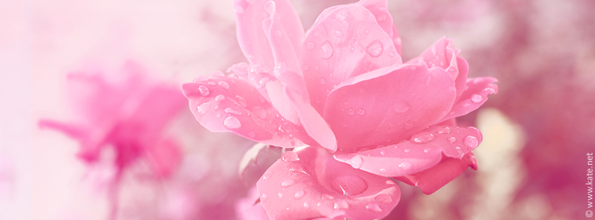 Flower Facebook Covers...
