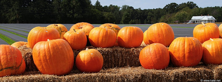 Autumn Pumpkins Facebook Covers | www.imgkid.com - The ...