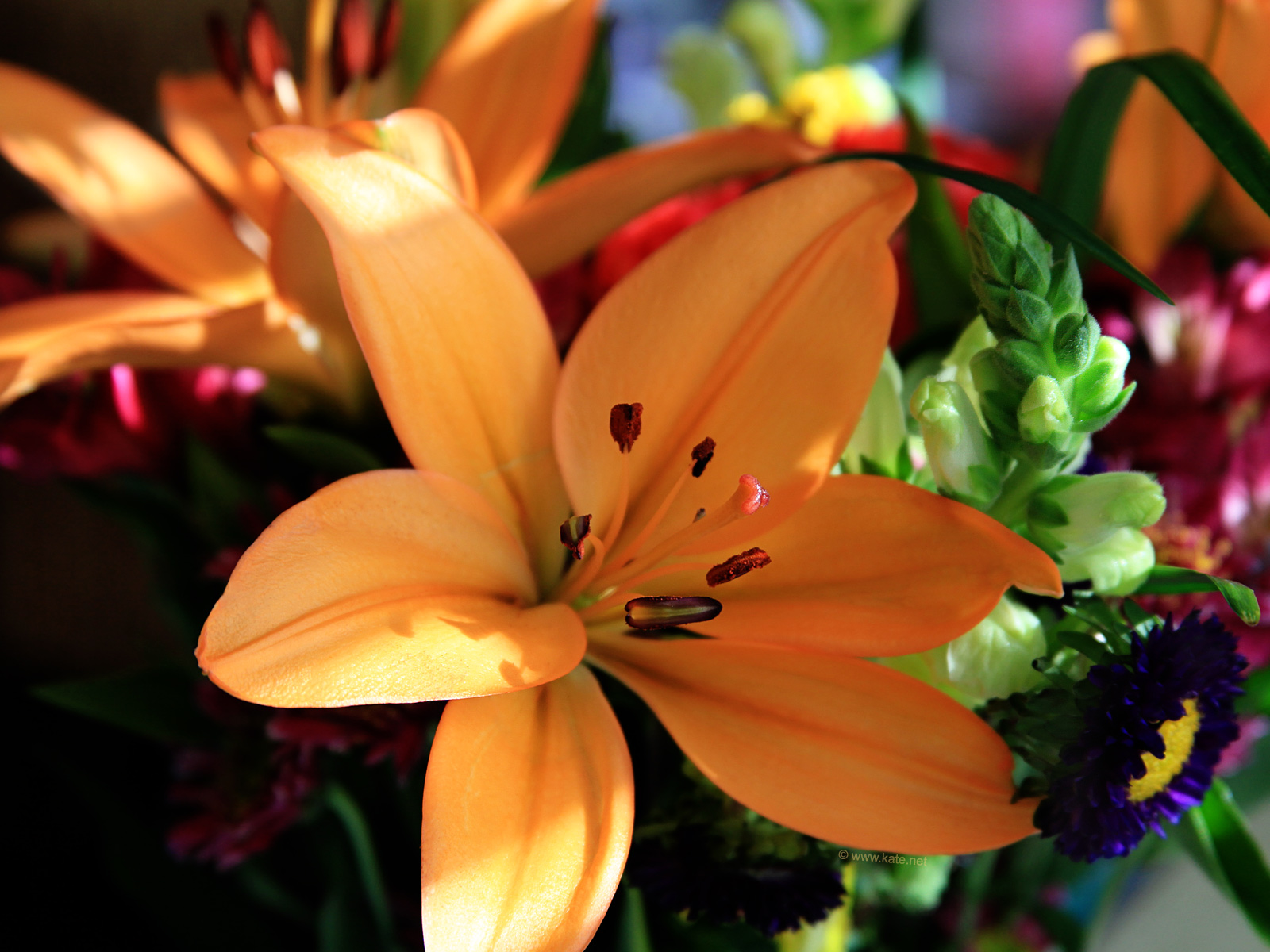 flower wallpapers, flower backgrounds on kate