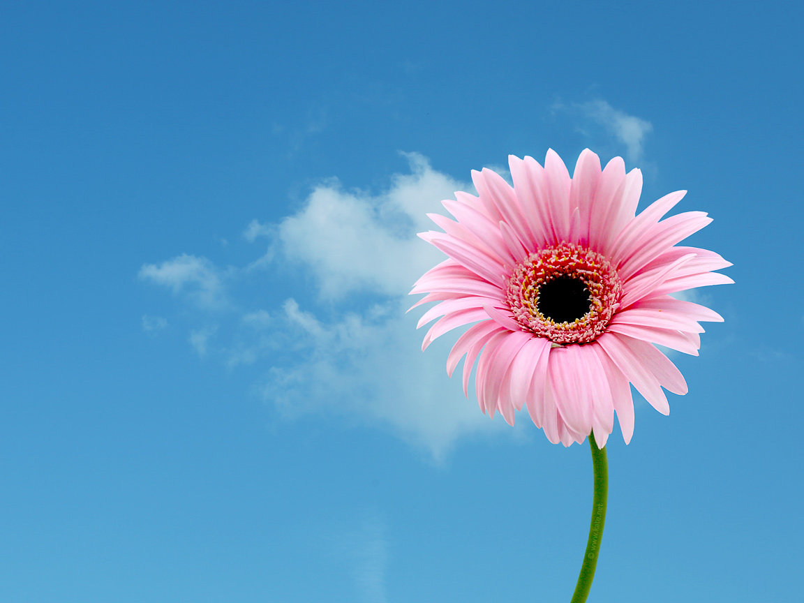 flower wallpapers flower backgrounds on