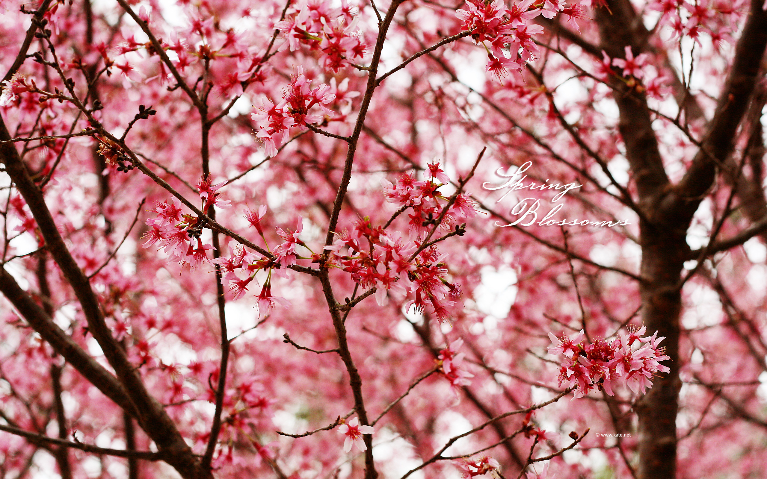Spring Wallpapers By Kate