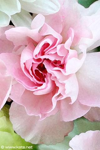 Free iphone wallpapers by kate iphone flower wallpaper pink flower mightylinksfo