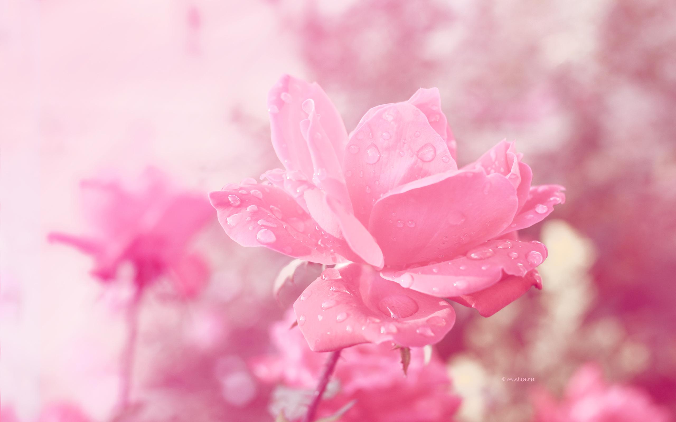 Flowers iPad